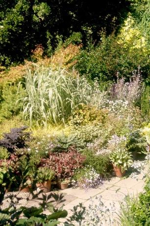 Great Dixter (Topfpflanzen)